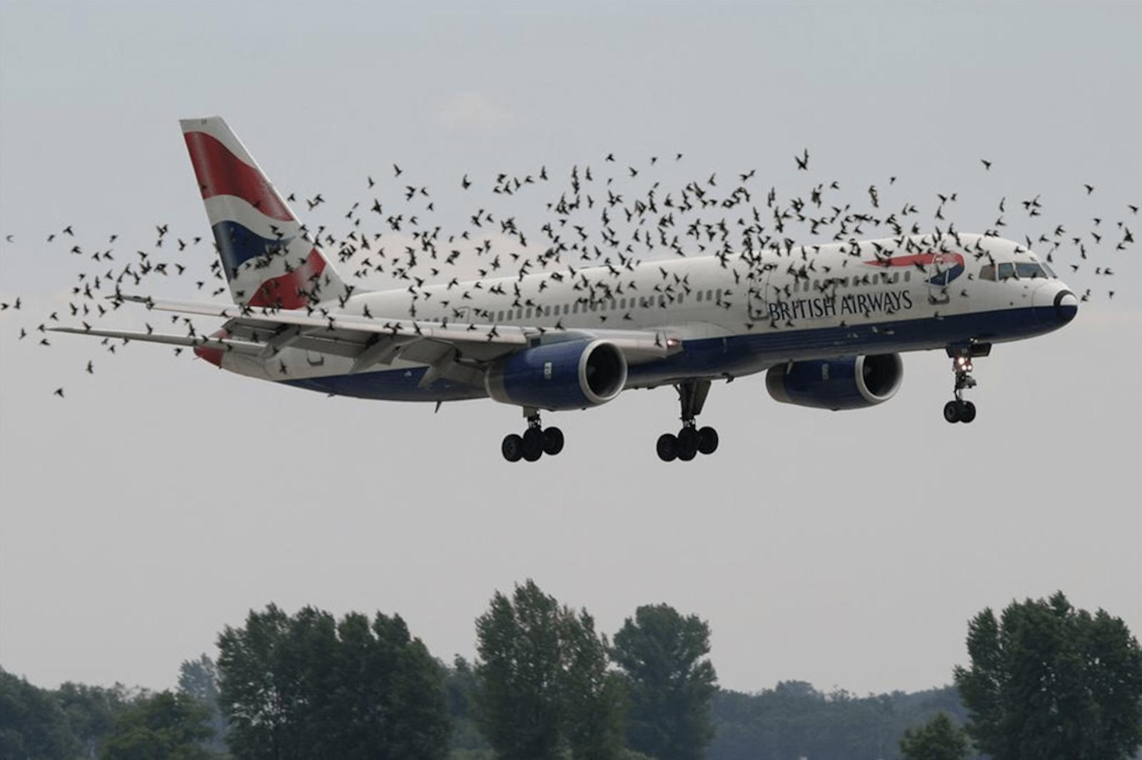 Птицы и двигатель