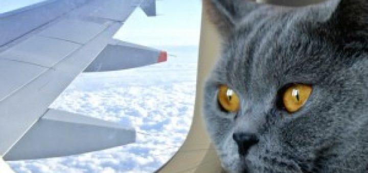 Котейка в самолете